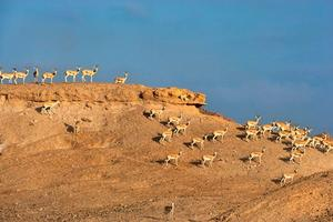 Arabian Wildlife Park (Desert Islands)