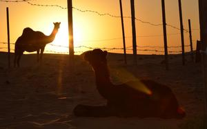 Thumbnail for Explore Abu Dhabi's Attractions from the Comfort of your Home